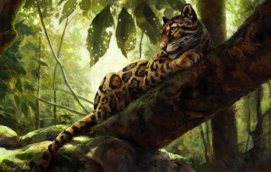 Borneo by kenket
