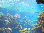 Coral-reef5 by Trisaw1