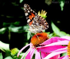 Butterfly by Michies-Photographyy
