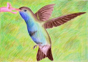The Mother's Day Hummingbird by 3-Legged-Gerbil