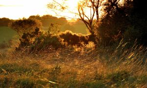 Barnagaw Golden hour by younghappy