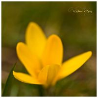 A Glimpes at Spring by Annetteks
