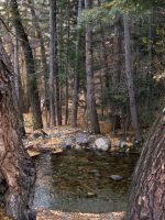 Zapata Falls Trail by xdancingintherain