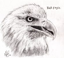 bald eagle by therealarien