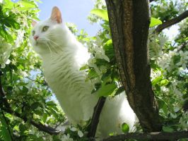 Kitty meets Tree by fraises