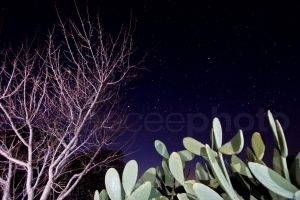 Starry Cactus by geeceeza