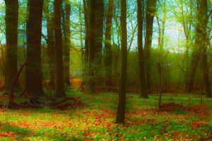 Surreal Forest with HDR photography by RotWine