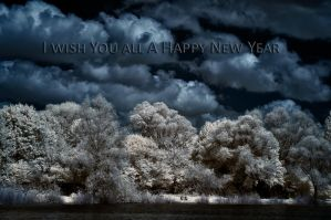 Happy New Year!!! by vw1956