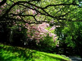 spring shade by cliford417