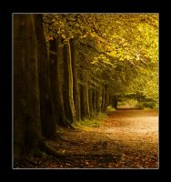 danefield path by theoden06