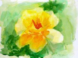 From My Graden- Yellow Rose by heartMelinda