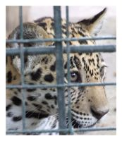 Too Cute to be Caged by 121divided121
