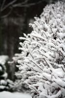 Snowy bush. by xPedrox90