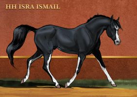 [ ] HH Isra Ismail by Templado