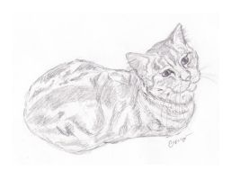 Cat Sketch  by caitiedidd