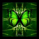 butterfly collection 34 by abylick