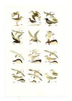 Antique birds print 3 by OMEGA86