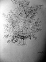 Cherry Tree by Of-the-Mist