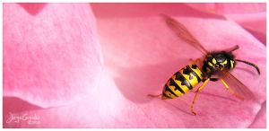 In Pink by matrex