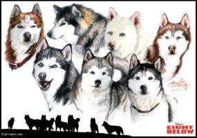 Eight Below - Lillidan86 by ArtOfThePawAndFang