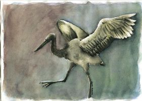 Dancing Bird - Watercolour by denn