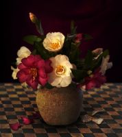 Camelias (revisited) by CouchyCreature