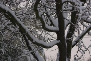 Snow on the tree by Mortitia212