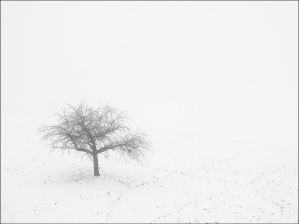 Solitude I by Limeandrum