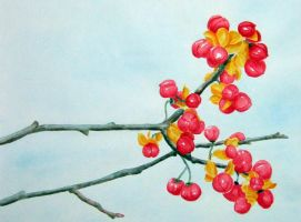 Berries Watercolour by elero