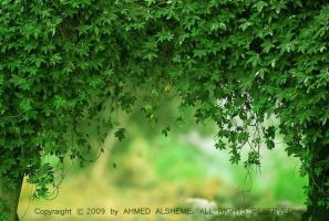 Under the shadows by ahmed-Alsheme