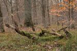 Autumn Woods17 by NHuval-stock