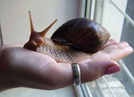 My big snail by Lonsdalegirl