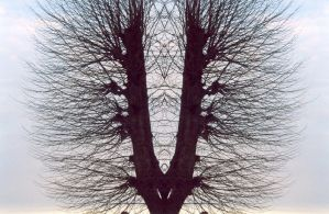 Vagina Tree by atcho