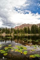 Floating Lily Pads on a Mountain Lake by mjohanson
