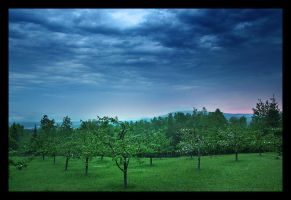 Orchard by P-Photographie