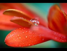 Fallen Droplet by StacyD