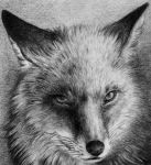 Red Fox by Skia