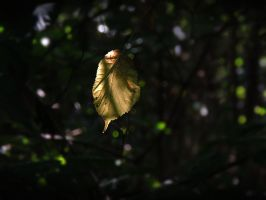 Leaf in the dark by stock1-2-3