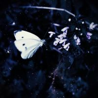 moonfly by AndreeaIuliana