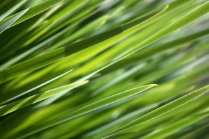 Grass Desktop Wallpaper by designerfied