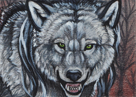 Gray Werewolf ACEO by MorRokko