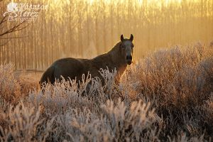 winter warm light by Hikari-kirin