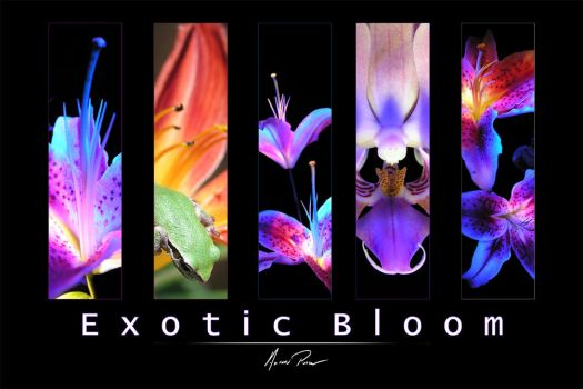 Exotic Bloom by OneBloomPhotography