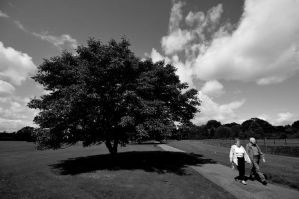 One tree... by JACAC