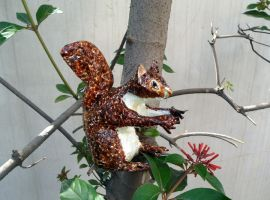Squirrel Sculpture by aakritiarts