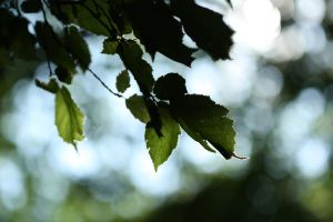 Leaves 02 by boxx2genetica-stock