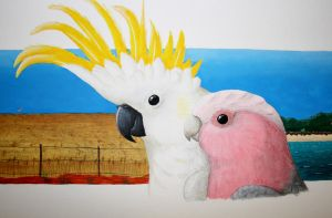 Sulphur-crested Cockatoo and Galah by gouldian-finch