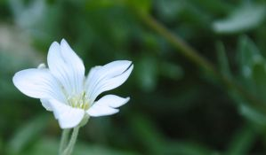 white flower by HappyDumb