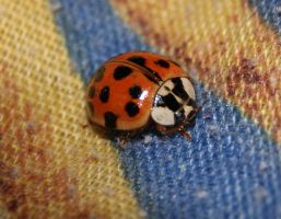 The ladybug in bed by Khimera