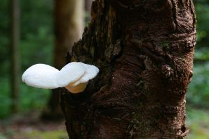 Shroom on a tree. by HartBiit
